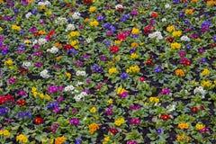 Coloured kwiaty fotografia stock