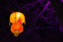 Diwali Lantern. Coloured lantern illuminates the forest at night Stock Photography