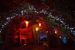 Illuminated Lanterns and Trees. Coloured lanterns illuminate the forest to celebrate Diwali, the traditional Indian `Festival of Lights Royalty Free Stock Images