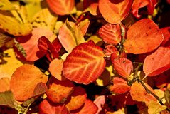 Coloured leafs Royalty Free Stock Photography