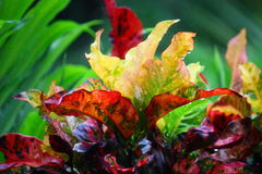 Coloured leafs. In Australia Stock Images