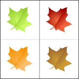 Coloured leaves Royalty Free Stock Photography