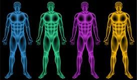 Coloured męscy bodies ilustracja wektor