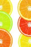 Coloured orange slince Stock Photo