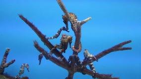 coloured pławikoniki dziwaczny kształta dopłynięcie w muzeum zbiory