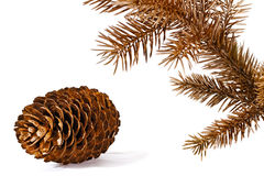 Coloured pine brunch and cone. Stock Photo