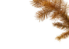 Coloured pine brunch. Royalty Free Stock Photos