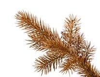 Coloured pine brunch. Stock Image