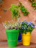Coloured pots Stock Images