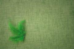 Coloured ptasi piórka na tkaniny tle Obrazy Royalty Free