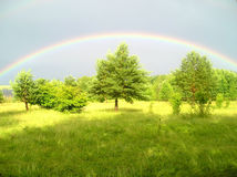 Coloured rainbow. Above the green trees and plants Royalty Free Stock Images