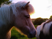 Coloured side shot of pony Stock Photography