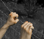 Coloured tortured hands grasping desperately barbed wire. On black and white background Stock Photo