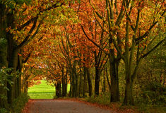 Coloured trees. Beautiful autumn mood on a street Stock Photos