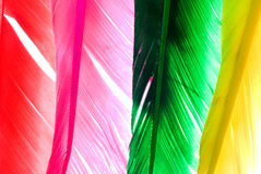 Colourfly bird feather Royalty Free Stock Image