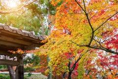 Colourful świątynia dach w Kyoto i, Japonia Obraz Royalty Free