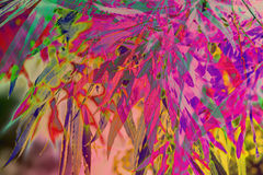 Colourful abstract Bamboo plants background Stock Photography
