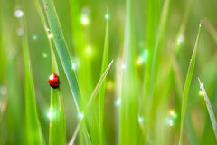 Colourful abstract photo, excellent for backgrounds and cards. Grass royalty free stock photos
