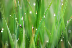 Colourful abstract photo, excellent for backgrounds and cards. grass Stock Image