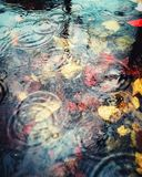 Colourful abstract of raindrops and Autumn leavesunderwater in a deep puddle. royalty free stock photography