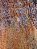 Colourful Abstract Textured Bark Pattern. Detail of a colourful abstract bark pattern, with flaking textured bark royalty free stock photography