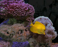 Colourful aquarium Royalty Free Stock Photos