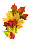 Colourful arrangement with autumn leaves Royalty Free Stock Photos