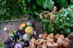 Colourful Asian vegetables and herbs in a market. A mixture of colourful vegetables and herbs for sale in an Asian market. They include eggplants, turmeric Stock Images