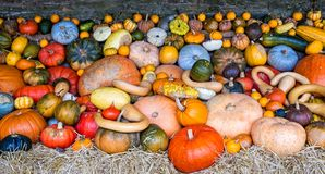 Colourful assortment of pumpkins, squashes and gourds royalty free stock images