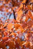 Colourful Autumn Royalty Free Stock Photos