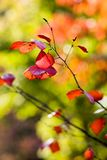 Colourful autumn Stock Image