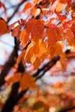 Colourful autumn Stock Photo