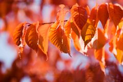 Colourful autumn Stock Photography
