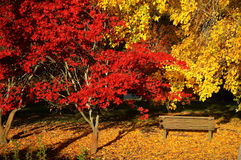 Colourful autumn in the botanic garden Stock Photos