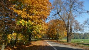 Colourful autumn in the city park. royalty free stock images