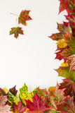 Colourful autumn fall leaves border on white background. Royalty Free Stock Image