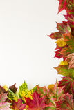 Colourful autumn fall leaves border on white background. Royalty Free Stock Images