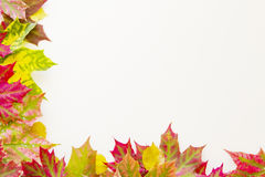 Colourful autumn fall leaves frame on white background. Stock Image