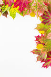 Colourful autumn fall leaves frame on white background. Stock Images
