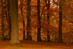 Colourful Autumn (Fall) trees. At Cragside House, Northumberland, England Royalty Free Stock Photos