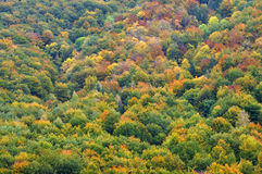 Colourful autumn forest trees Stock Images