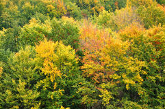 Colourful autumn forest trees Stock Image