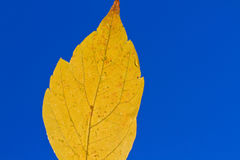 Colourful autumn leaf Stock Photography