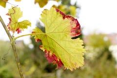 Colourful autumn leaf Stock Image
