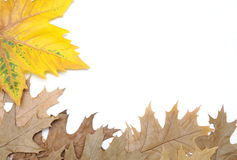 Colourful autumn leaves. Royalty Free Stock Photos