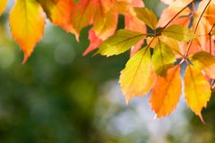 Colourful Autumn Leaves Royalty Free Stock Photos