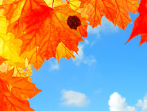 Colourful autumn leaves Royalty Free Stock Photography