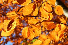 Colourful Autumn Leaves  Stock Images