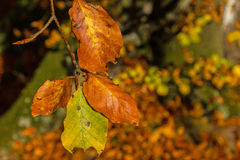 Colourful autumn leaves Stock Photo