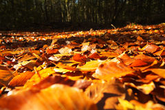 Colourful autumn leaves in orange yellow and brown Stock Photos